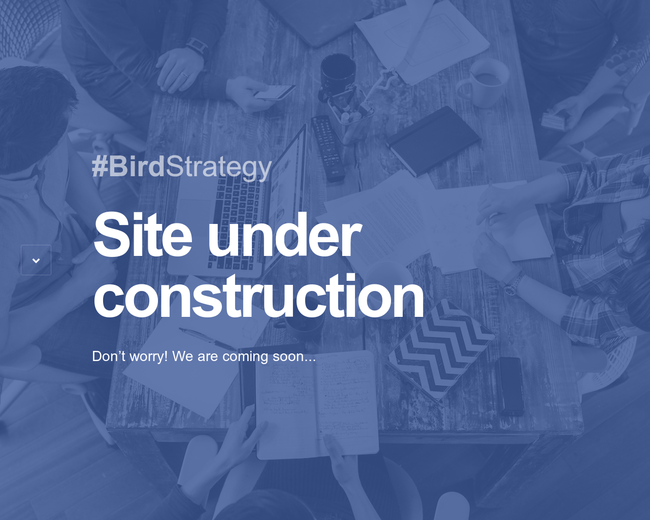 Bird Strategy